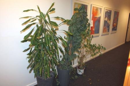 2 store planter i selvvandingspotter + 2 planter.